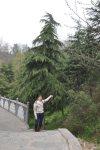 A árvore que mais gostei!